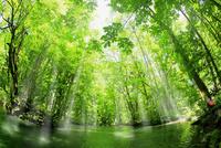 新緑の奥入瀬渓流に光芒