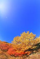 千畳敷カールよりダケカンバとナナカマドの紅葉