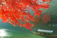 紅葉の嵐山 保津川の屋形船