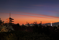 八坂の塔と京都市街夜景
