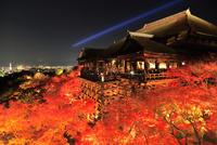 紅葉の清水寺 ライトアップ