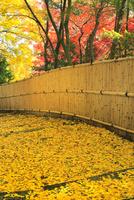 京都・洛西 紅葉の金蔵寺