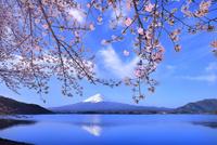 河口湖の桜と逆さ富士