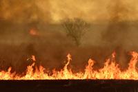 渡良瀬遊水地の野焼き 炎と煙