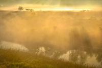 荒川河川敷の霧景色