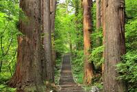 新緑の羽黒山石段参道