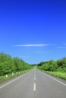 新緑の道と雲