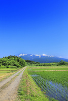 新緑の鳥海山と水田に道