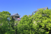 上田城跡公園 南櫓と北櫓の新緑