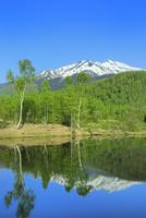 新緑の乗鞍高原 まいめの池と残雪の乗鞍岳