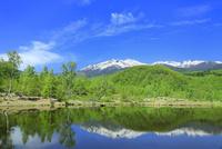 新緑の乗鞍高原 まいめの池と乗鞍岳