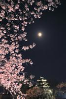 松本城と夜桜に満月 11076029298| 写真素材・ストックフォト・画像・イラスト素材|アマナイメージズ
