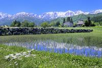 水田に映る集落と白馬の山並み