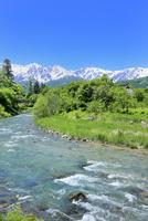 新緑の大出 姫川と白馬三山