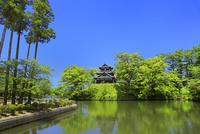 高田公園 新緑と三重櫓