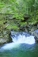 新緑の乗鞍高原 渓流と木橋