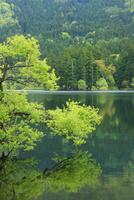北竜湖の新緑