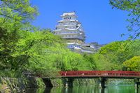 城見橋と新緑の姫路城  11076029570| 写真素材・ストックフォト・画像・イラスト素材|アマナイメージズ