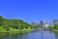 新緑の桜田濠と丸の内ビル群