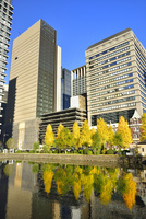 和田倉濠に映る日比谷通りのイチョウ並木と丸の内ビル群