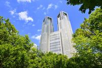 新緑の街路樹と都庁に新宿副都心高層ビル
