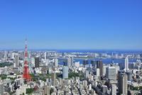 六本木ヒルズより東京タワーと東京の街並み展望