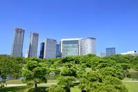 浜離宮恩賜庭園と汐留高層ビル群