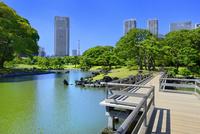 浜離宮恩賜庭園 汐入の池と海手お伝い橋に汐留高層ビル群