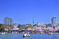 上野公園 不忍池と桜並木にスカイツリー