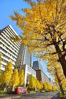 日比谷通り 紅葉のイチョウ並木と丸の内ビル群