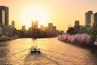 大川沿い桜並木の夕景と遊覧船