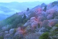 吉野山,下千本の桜 11076030148| 写真素材・ストックフォト・画像・イラスト素材|アマナイメージズ
