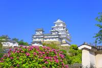 新緑の姫路城 天守閣とツツジの花
