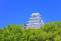 新緑の姫路城 天守閣 11076030322| 写真素材・ストックフォト・画像・イラスト素材|アマナイメージズ