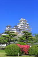 新緑の姫路城 天守閣とツツジの花 11076030340| 写真素材・ストックフォト・画像・イラスト素材|アマナイメージズ