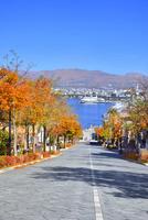 秋の函館 紅葉の八幡坂と函館港