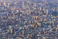 札幌,もいわ山山頂展望台から望む市街夕景