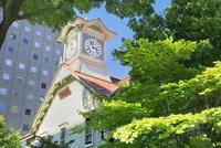 札幌,新緑の時計台