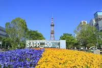 札幌,新緑の大通公園とさっぽろテレビ塔 11076030464| 写真素材・ストックフォト・画像・イラスト素材|アマナイメージズ