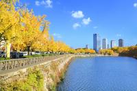 黄紅葉のイチョウ並木と大阪ビジネスパーク