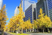大阪・御堂筋,黄紅葉のイチョウ並木