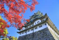 名古屋城天守閣と紅葉