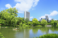 札幌・中島公園,菖蒲池