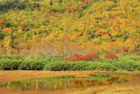 白馬山麓・栂池自然園の浮島湿原と紅葉 11076030950| 写真素材・ストックフォト・画像・イラスト素材|アマナイメージズ