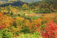 白馬山麓・栂池自然園の浮島湿原と紅葉