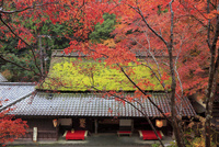 嵯峨野・鮎茶屋 平野屋と紅葉