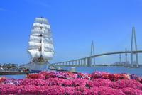 花咲く海王丸パークの海王丸と新湊大橋