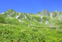 高山植物咲く夏の千畳敷カールと宝剣岳