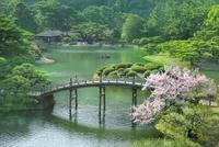 栗林公園の偃月橋に桜と掬月亭