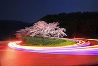 峠の桜と光跡